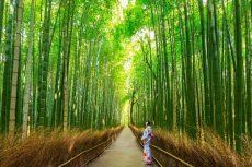 Tận hưởng kì nghỉ cùng chuyến du lịch rừng tre Sagano