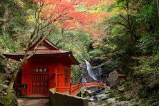 Vietjet mở bán vé máy bay đến thiên đường mùa thu Osaka